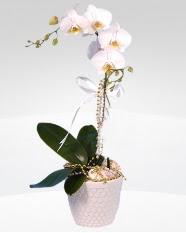 1 dallı orkide saksı çiçeği  Mardin online çiçekçi , çiçek siparişi