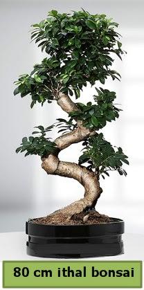 80 cm özel saksıda bonsai bitkisi  Mardin çiçekçi telefonları