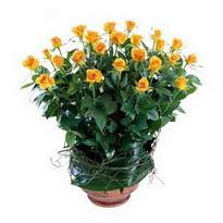Mardin cicekciler , cicek siparisi  10 adet sari gül tanzim cam yada mika vazoda çiçek