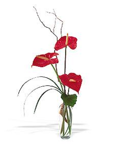 Mardin çiçek siparişi sitesi  cam yada mika Vazoda 3 adet  antoryum