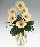 Mardin kaliteli taze ve ucuz çiçekler  cam yada mika vazoda 9 adet gerbera