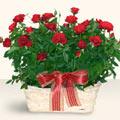 Mardin İnternetten çiçek siparişi  11 adet kirmizi gül sepette