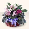 Mardin çiçek gönderme sitemiz güvenlidir  4 adet afrika meneksesi