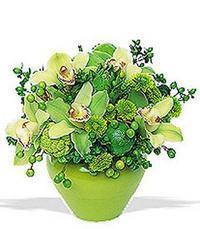 cam yada mika vazoda 5 adet orkide   Mardin online çiçekçi , çiçek siparişi