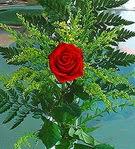 1 adet kirmizi gül buketi   Mardin çiçek siparişi vermek