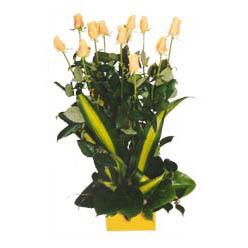 12 adet beyaz gül aranjmani  Mardin kaliteli taze ve ucuz çiçekler