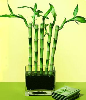 Mardin anneler günü çiçek yolla  Good Harmony Lucky Bamboo camda