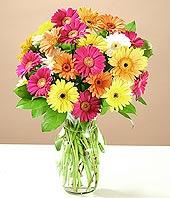 Mardin çiçek online çiçek siparişi  17 adet karisik gerbera
