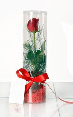 Mardin çiçek yolla  Silindir vazoda tek kirmizi gül