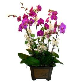 Mardin cicek , cicekci  4 adet orkide çiçegi