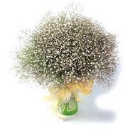Mardin çiçek mağazası , çiçekçi adresleri  cam yada mika vazo içerisinde cipsofilya demeti