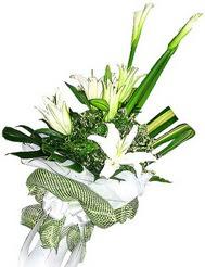 Mardin güvenli kaliteli hızlı çiçek  3 dal kazablanka çiçegi ve yesillikler