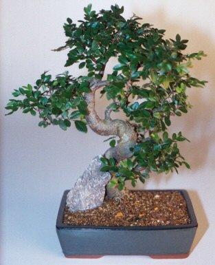 Mardin çiçek gönderme sitemiz güvenlidir  ithal bonsai saksi çiçegi  Mardin çiçek siparişi sitesi
