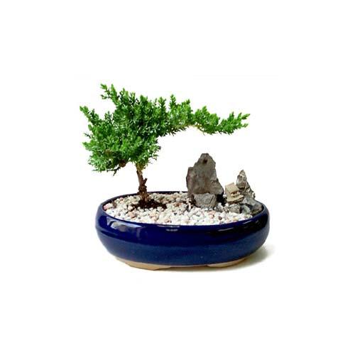 ithal bonsai saksi çiçegi  Mardin çiçek gönderme