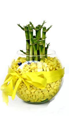cam fanus içerisinde bambo  Mardin internetten çiçek satışı