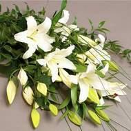 Mardin güvenli kaliteli hızlı çiçek  3 adet kazablanka çiçegi