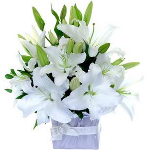 Mardin çiçek yolla  2 dal cazablanca vazo çiçeği
