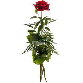 Mardin online çiçekçi , çiçek siparişi  1 adet kırmızı gülden buket