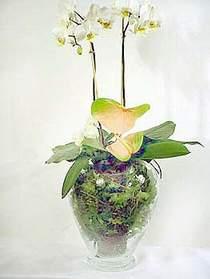 Mardin çiçek satışı  Cam yada mika vazoda özel orkideler
