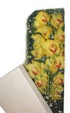 Mardin çiçek gönderme  Kutu içerisine dal cymbidium orkide