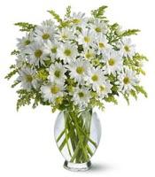 Vazo içerisinde beyaz krizantem çiçekleri  Mardin çiçekçi mağazası