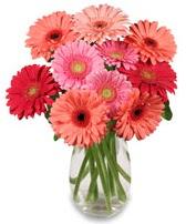 vazo içerisinde 13 adet gerbera çiçeği  Mardin çiçek siparişi sitesi