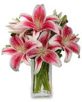 Vazo içerisinde 5 dal kazablanka çiçeği  Mardin cicekciler , cicek siparisi