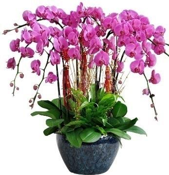 9 dallı mor orkide  Mardin 14 şubat sevgililer günü çiçek