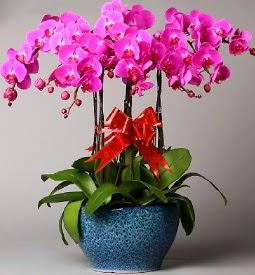 7 dallı mor orkide  Mardin çiçek online çiçek siparişi