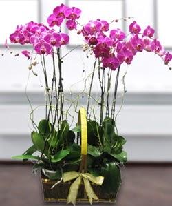 4 dallı mor orkide  Mardin güvenli kaliteli hızlı çiçek