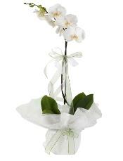 1 dal beyaz orkide çiçeği  Mardin çiçek siparişi vermek