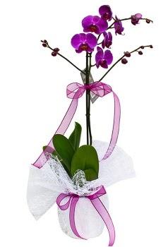 Tek dallı mor orkide  Mardin çiçekçi telefonları