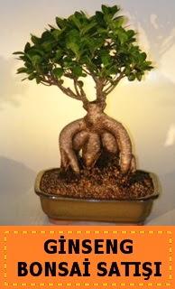 Ginseng bonsai satışı japon ağacı  Mardin cicek , cicekci