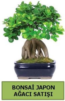 Bonsai japon ağacı satışı  Mardin çiçek satışı