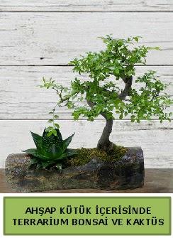 Ahşap kütük bonsai kaktüs teraryum  Mardin internetten çiçek siparişi