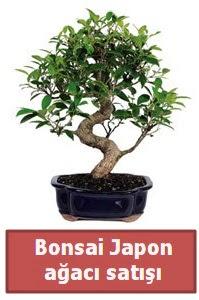 Japon ağacı bonsai satışı  Mardin çiçek siparişi sitesi