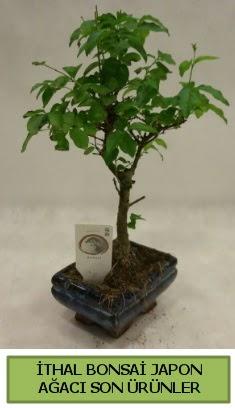 İthal bonsai japon ağacı bitkisi  Mardin hediye sevgilime hediye çiçek