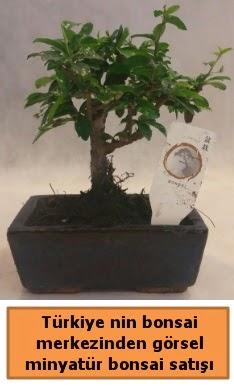 Japon ağacı bonsai satışı ithal görsel  Mardin çiçek yolla