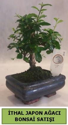 İthal japon ağacı bonsai bitkisi satışı  Mardin çiçekçi telefonları