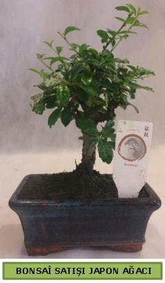 Minyatür bonsai ağacı satışı  Mardin çiçek gönderme