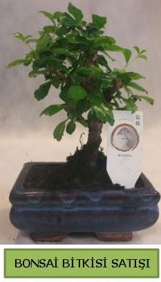 Bonsai ithal görsel minyatür japon ağacı  Mardin ucuz çiçek gönder