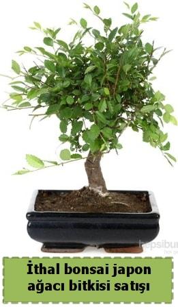 İthal bonsai saksı çiçeği Japon ağacı satışı  Mardin İnternetten çiçek siparişi
