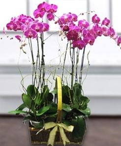 7 dallı mor lila orkide  Mardin çiçek gönderme sitemiz güvenlidir