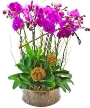 Ahşap kütükte lila mor orkide 8 li  Mardin internetten çiçek satışı