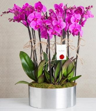 11 dallı mor orkide metal vazoda  Mardin çiçek gönderme sitemiz güvenlidir