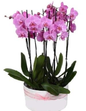 Beyaz seramik içerisinde 7 dallı mor orkide  Mardin çiçekçi telefonları