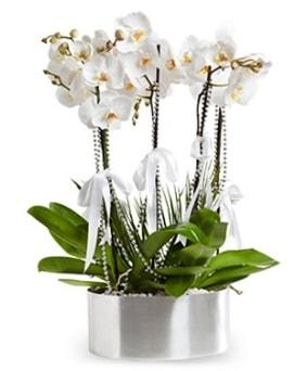 Beş dallı metal saksıda beyaz orkide  Mardin çiçek yolla