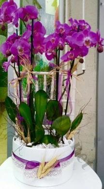 Seramik vazoda 4 dallı mor lila orkide  Mardin online çiçek gönderme sipariş