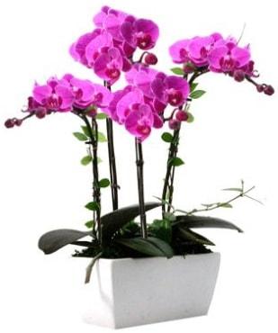 Seramik vazo içerisinde 4 dallı mor orkide  Mardin çiçek satışı