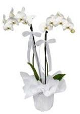 2 dallı beyaz orkide  Mardin güvenli kaliteli hızlı çiçek